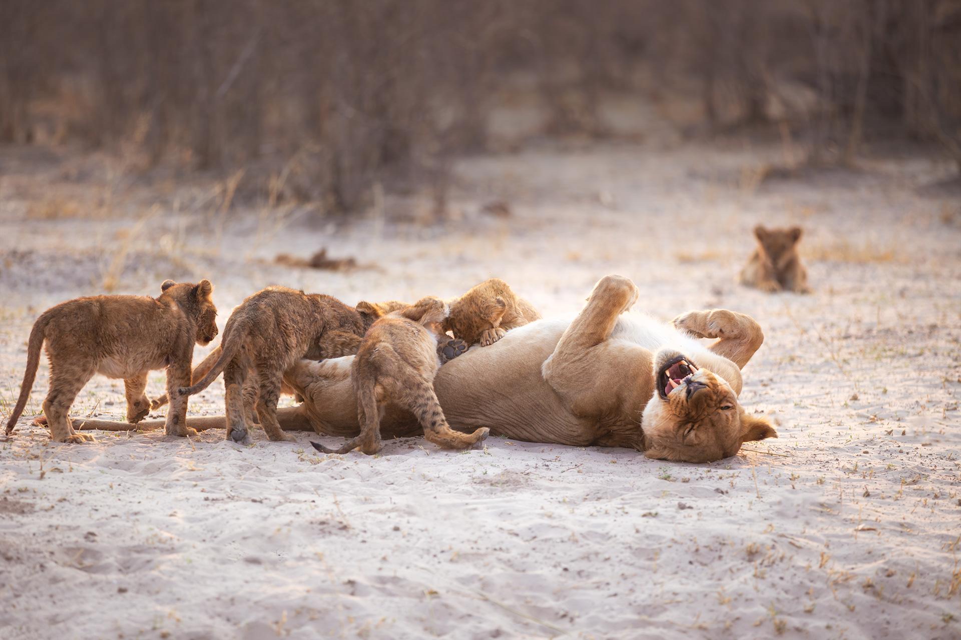 Unique African Wildlife Safari