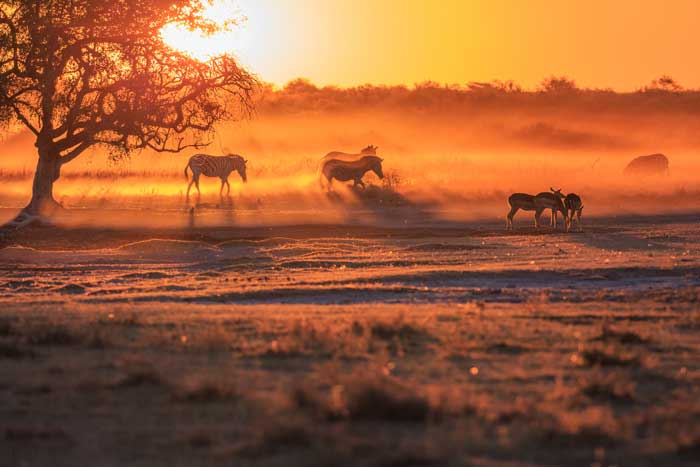 wild-focus-safaris_sunset-02_botswana_S