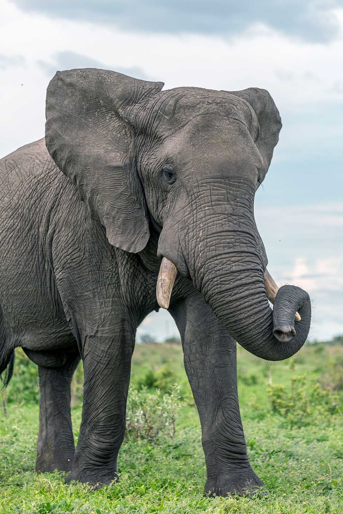wildfocussafaris_elephant