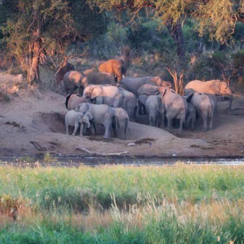 wild-focus-safaris_elephant-bathing_botswana_S