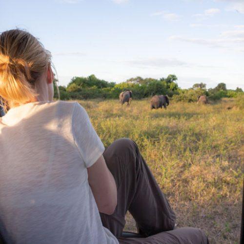 wild-focus-safaris_game-drive_botswana_S