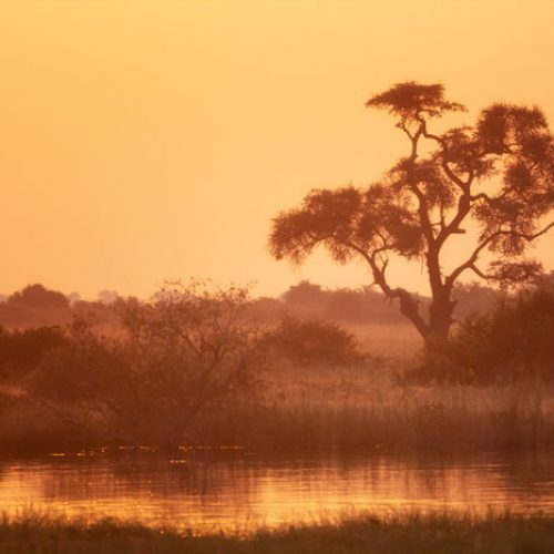 wild-focus-safaris_sunset02_botswana_S